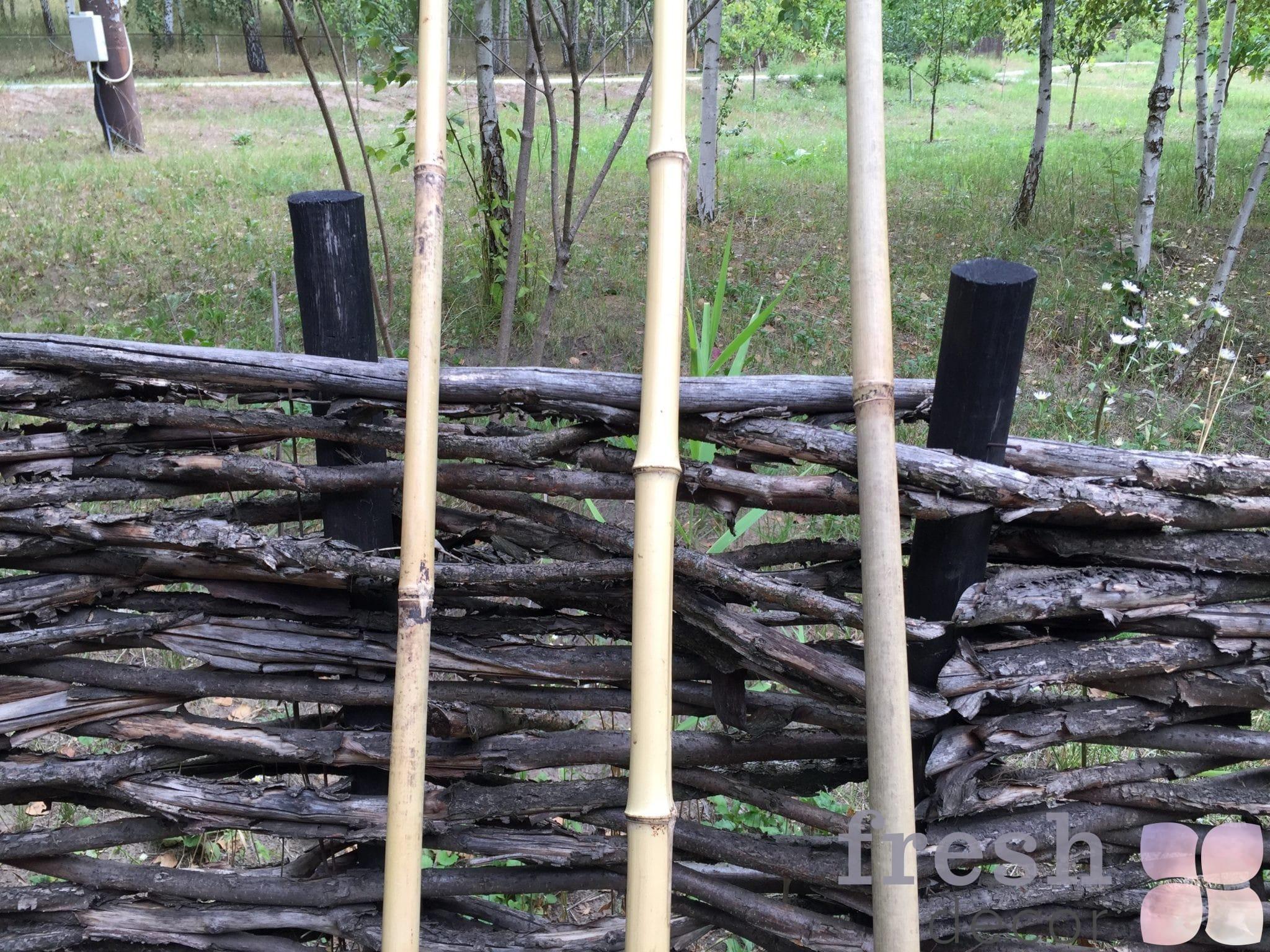 Бамбук в аренду