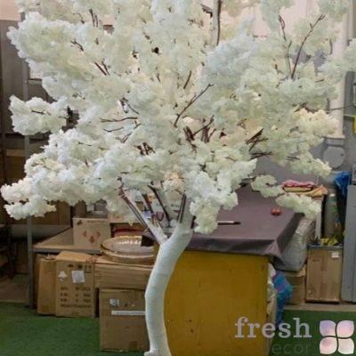 beloe zimnee derevo vishni v cvetu iskustvennoe