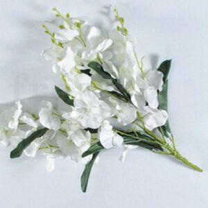 falenopsis orxideya v arendu 1
